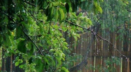 Дождь на Троицу