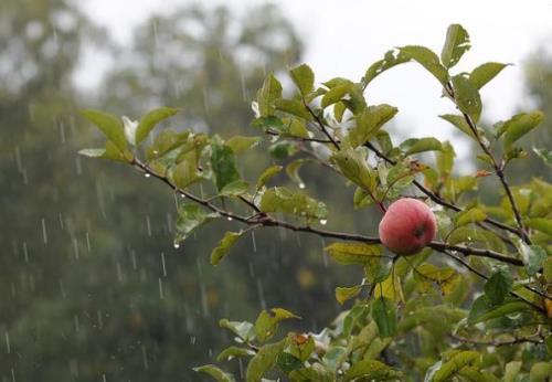 Дождливый спас