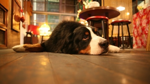 Новые мечты в год Собаки