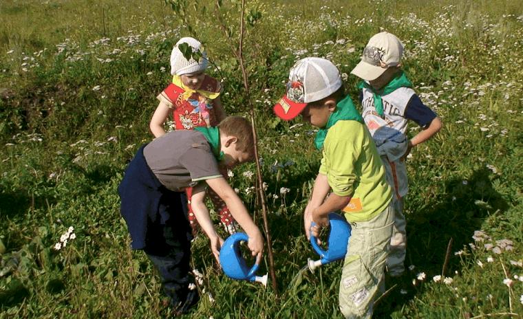 Рисунок 3. Высадка деревьев