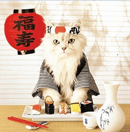 Рисунок 1. Кот в японском национальном костюме в День кошек в Японии