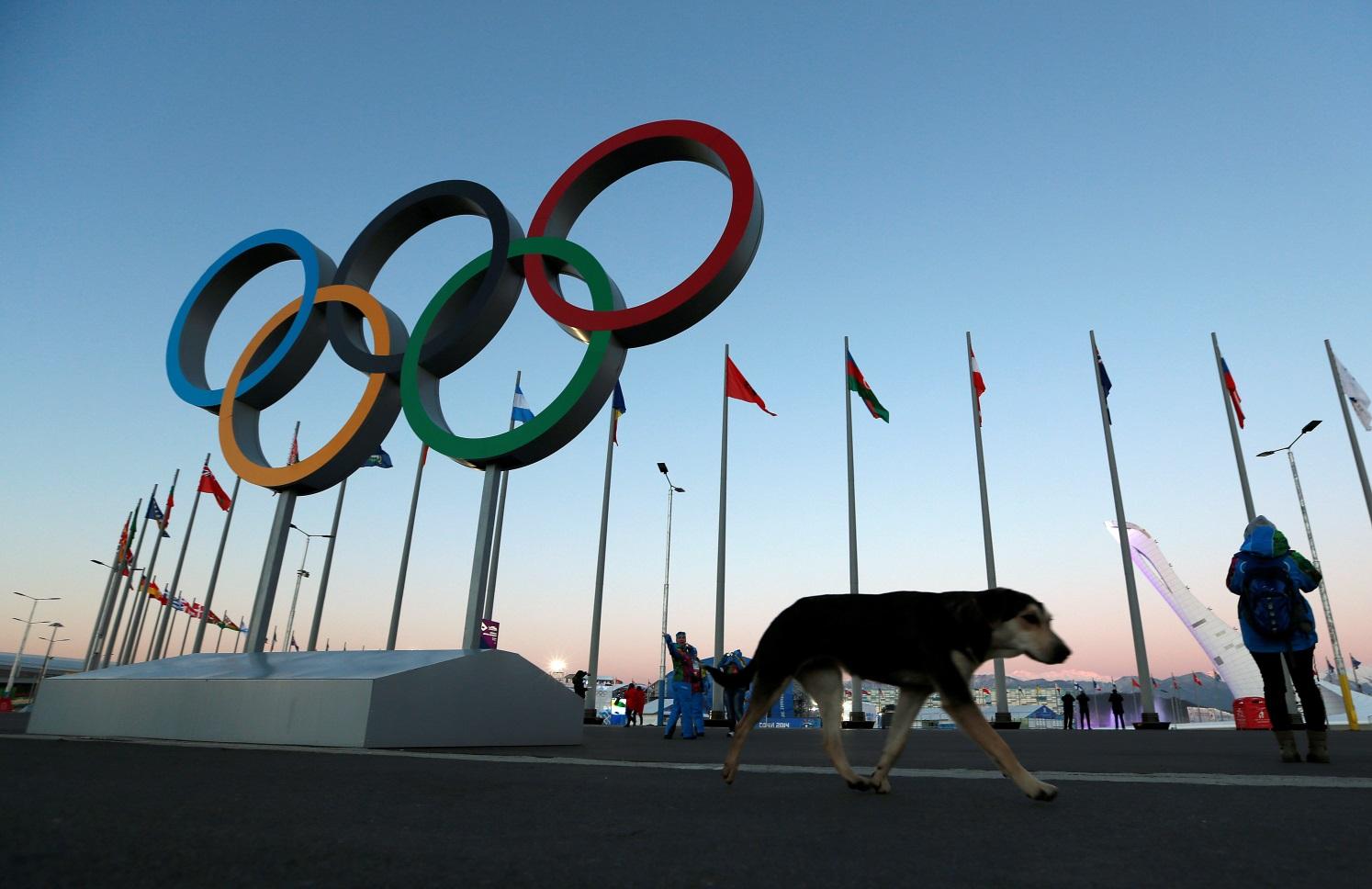 Рисунок 1. Большой резонанс в обществе вызвал отлов собак в Сочи перед проведением Олимпиады в 2014 году
